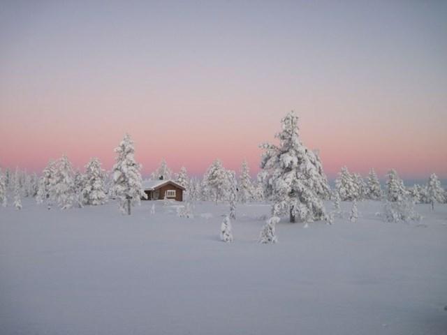 Rừng nhiệt đới Boreal, Na Uy.