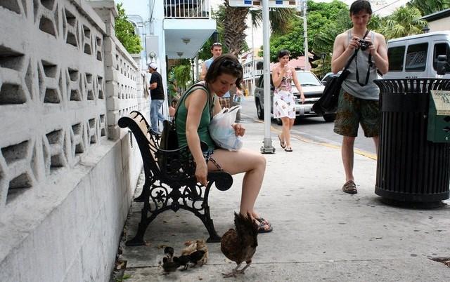 Lạ lùng hòn đảo bị hàng nghìn con gà hoang 'xâm chiếm' - Ảnh 6