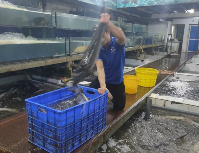 Theo Bộ NN-PTNT, cá tầm thuộc Phụ lục II Công ước quốc tế về buôn bán động vật, thực vật hoang dã nguy cấp được Cơ quan CITES Việt Nam.