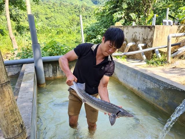 Nhiều hộ nuôi cá tầm trong nước phải bỏ hồ vì không cạnh tranh được với cá Tầm Trung Quốc.