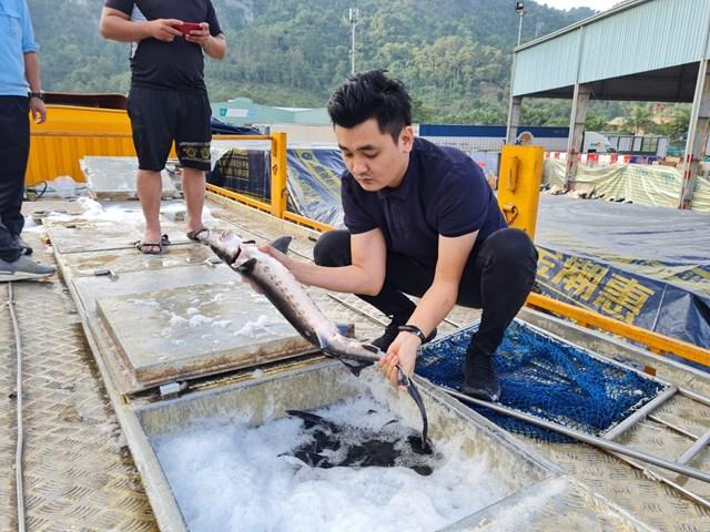 Theo các chuyên gia, cơ quan chức năng cần tăng cường kiểm tra, giám sát việc nhập khẩu cá tầm Trung Quốc.