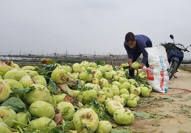 Nhiều ngày qua nông sản của người Hải Dương khó tiêu thụ.