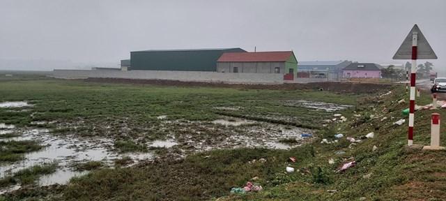 Ô nhiễm môi trường tại cụm công nghiệp Nghĩa Mỹ khiến gần 1ha diện tích trồng lúa của người dân bị ảnh hưởng.