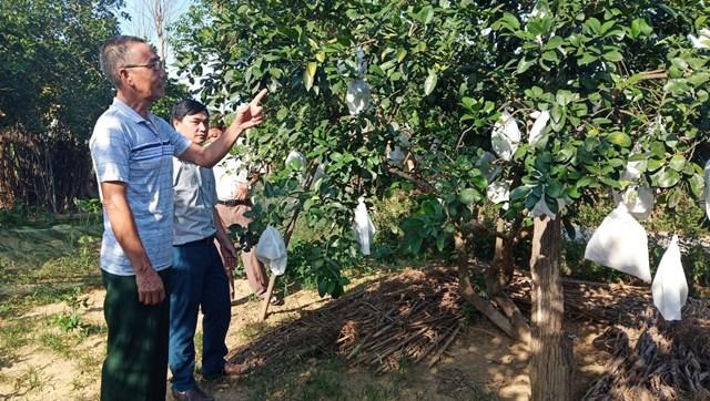 Trồng cây ăn quả mang lại hiệu quả kinh tế cao, giúp người dân xóa đói giảm nghèo ở xã Hương Hóa.