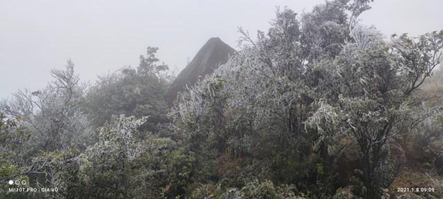 Các đỉnh núi cao thuộc dãy Cao Ly (huyện Bình Liêu), từ khoảng 9h sáng 8/1, đã bắt đầu xuất hiện băng đá phủ kín các cành cây, ngọn cỏ.