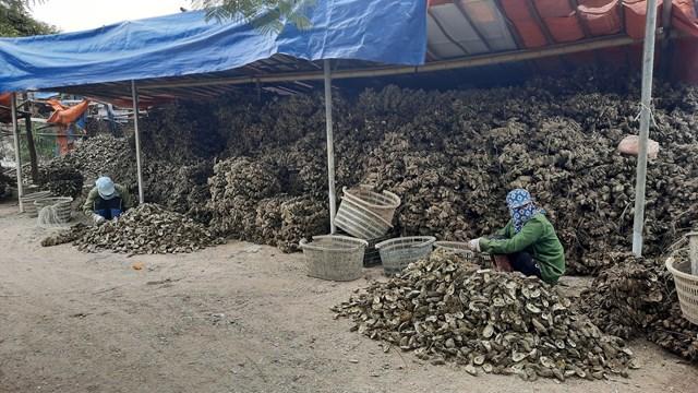 Một cơ sở khai thác hàu tại thị trấn Cái Rồng (huyện Vân Đồn, tỉnh Quảng Ninh)