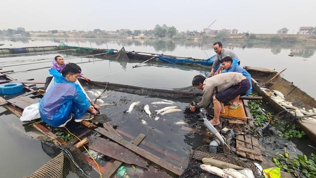 Theo nhiều hộ nuôi, cá lồng chết hàng loạt do nước sông Cầu ô nhiễm. Ảnh: Nam Anh.