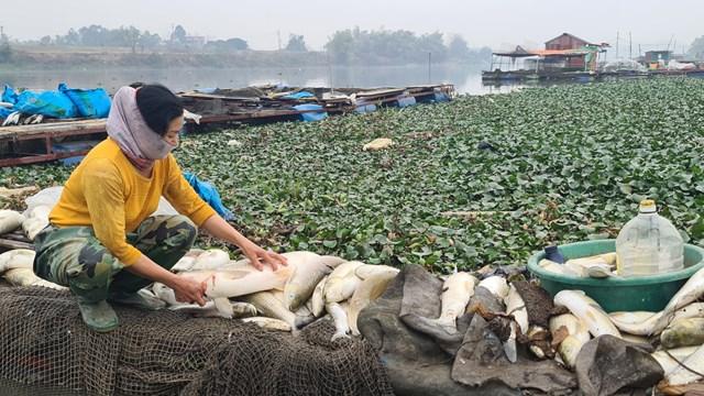 Nhiều hộ điêu đứng sau đợt cá chết này.