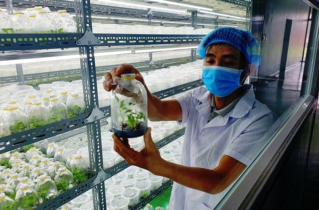 Bên trong trung tâm nuôi trồng cáy mô sâm Ngọc Linh của Sâm Sâm Group.