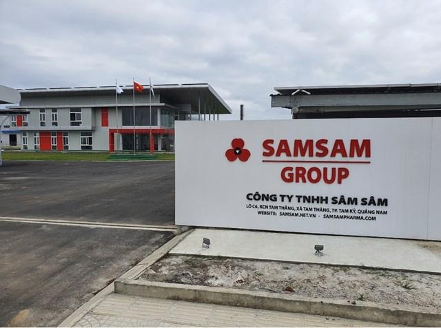 Sâm Sâm Group nơi tiên phong cho việc nuôi trồng sâm Ngọc Linh bằng phương pháp cấy mô.
