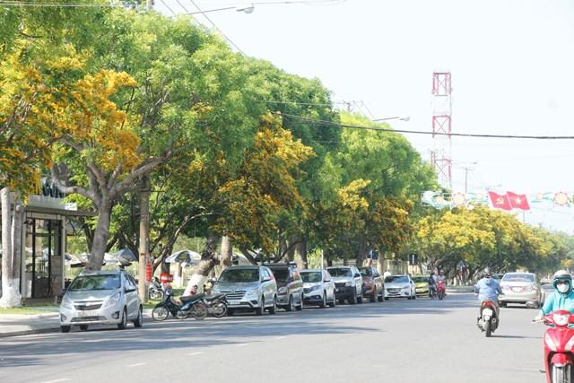 Hàng cây sưa vàng trên phố Tam Kỳ.
