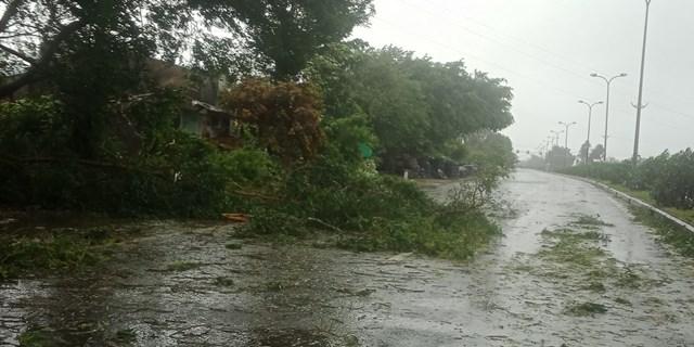 Nhiều cây cồi bị gió làm gãy ngã. trên Quoocsf lộ 1A