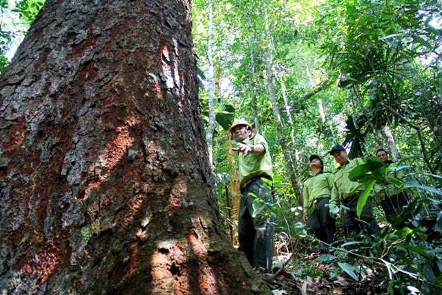 Lực lượng kiểm lâm Quảng Nam tuần tra bảo vệ rừng phòng hộ.