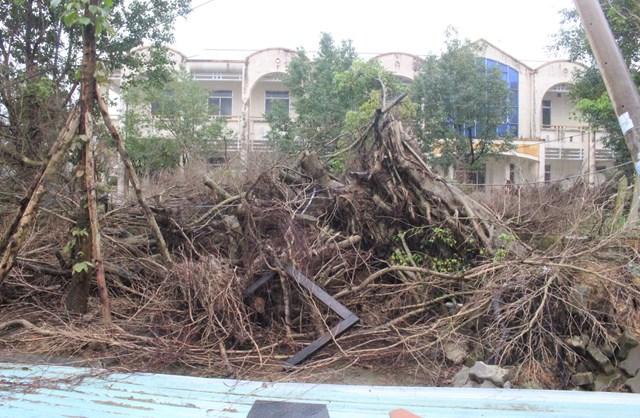 Một góc cây cối nằm ngổn ngang trong khuôn viên TTYT TP Tam Kỳ.