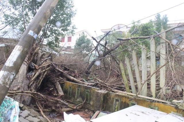Tường rào TTYT TP Tam Kỳ bị hư hỏng do cây cối ngã đổ xuống.