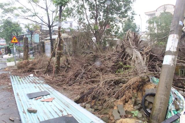 Cây cối ngã đổ ở TTYT TP Tam Kỳ gây mất mỹ quan đô thị.