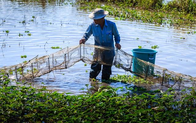 Sau 1 ngày đặt lú, sáng ngày hôm sau, người dân sẽ kiểm tra để thu hoạch tôm, cá.