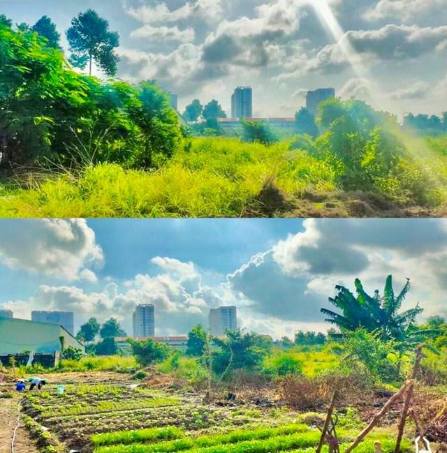 Từ mảnh đất bỏ hoang, nhóm sinh viên khai hoang, trồng rau, phân phát cho bà con vùng dịch. Ảnh: NVCC.
