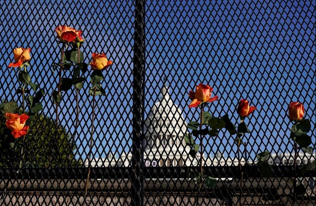 Hoa được đặt trên hàng rào an ninh sau ngày sau vụ bạo loạn tại Điện Capitol Mỹ hôm 6/1.