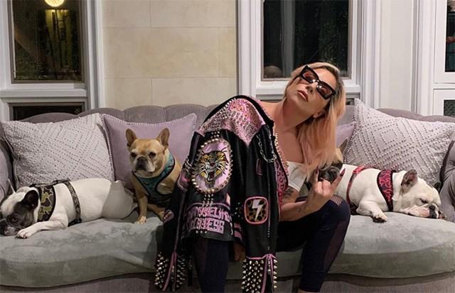 Lady Gaga từng đăng nhiều hình ảnh ba chú chó bull giống Pháp trên Instagram và thi thoảng bế chúng đi chơi cùng.