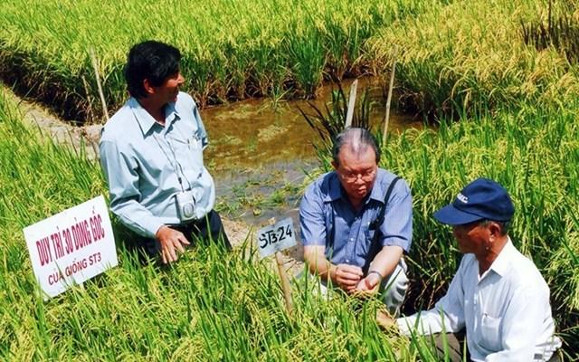 GS Võ Tòng Xuân (giữa) trên cánh đồng lúa thử nghiệm.