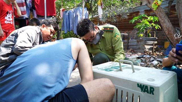 Lực lượng chức năng di dời khỉ đã bắn thuốc mê, sáng 16/1. Ảnh: Vnexpress.