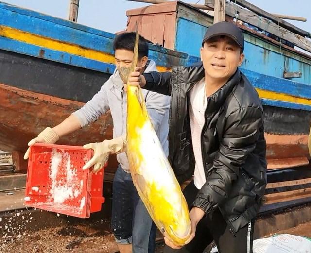 Ngư dân Hà Tĩnh trúng lớn cá chim vây vàng - Ảnh 1