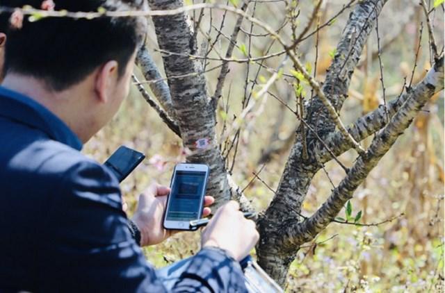 Sơn La thí điểm truy xuất nguồn gốc cây đào - Ảnh 1