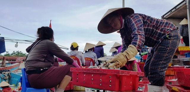 Hàng nghìn lao động mưu sinh tại cảng Hới trông chờ dự án nạo vét sớm được triển khai.
