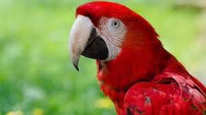 Động vật cũng thay đổi hình dạng để ứng phó với biến đổi khí hậu